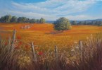 Fields of Gold (pastel)29x42cm $80