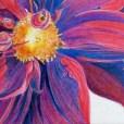 Red Velvet (Pencil) 15x21cm $50