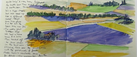 Lavendar fields - Provence