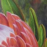 Protea 5