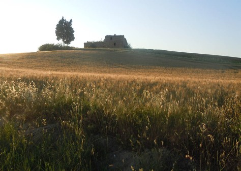 Tuscan wheatfields