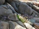 Wildflowers. Sardinia