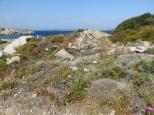Wildflowers. Sardinia.