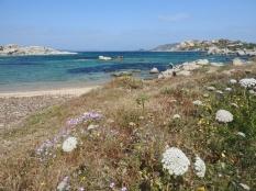 Coastal flora. Sardinia.