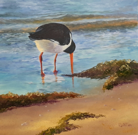 Pied Oystercatcher Acrylic on canvas 35x35cm $220